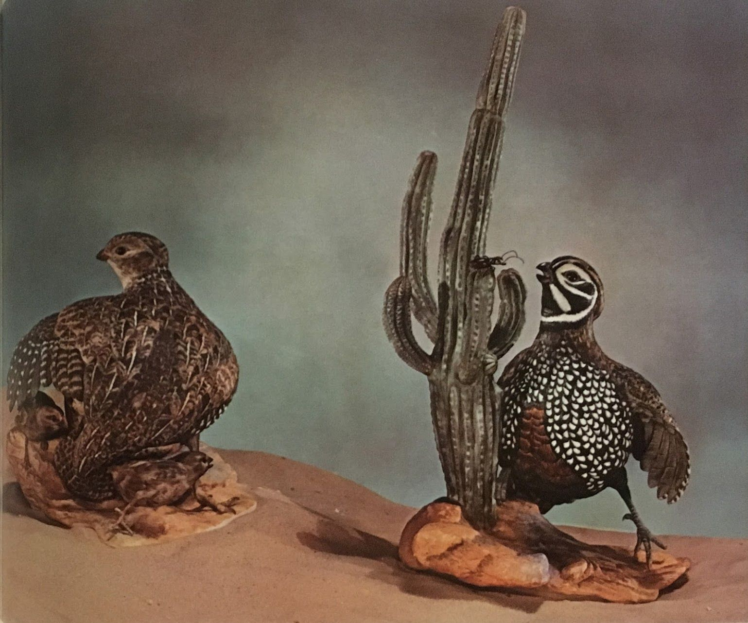 Edward Marshall Boehm Mearns Quail Pair Hallmark 467 Size with regard to size 1539 X 1282