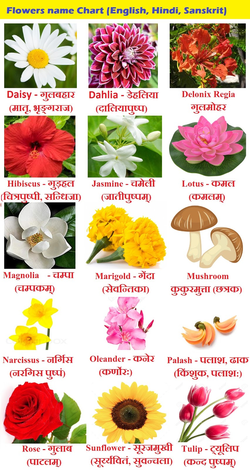Flowers Name In Hindi Phoolon Ke Naam Sanskrit And intended for sizing 852 X 1600