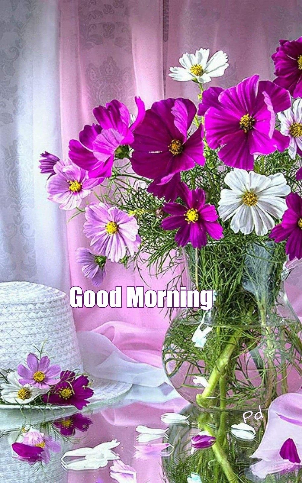 Good Morning Greetings Cosmos Flowers Beautiful Flowers for sizing 1002 X 1600