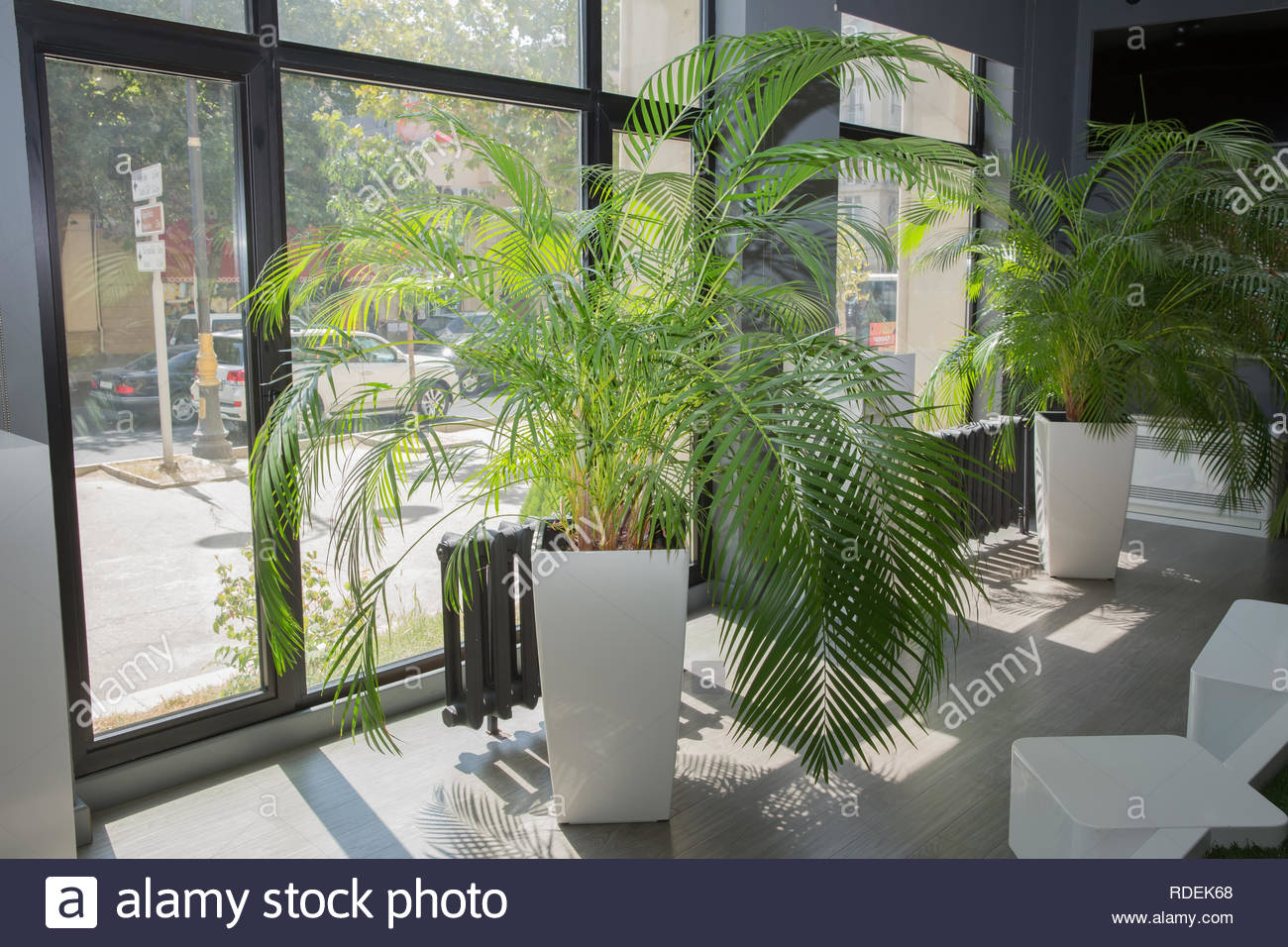 Vases In A Row Green Plant Pot Next The Window In The in dimensions 1300 X 956